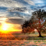 Trey Radcliff's Photograph of a tree from www.stuckincustoms.com